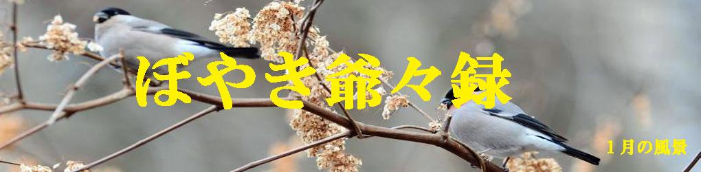 ぼやき爺々録(新)